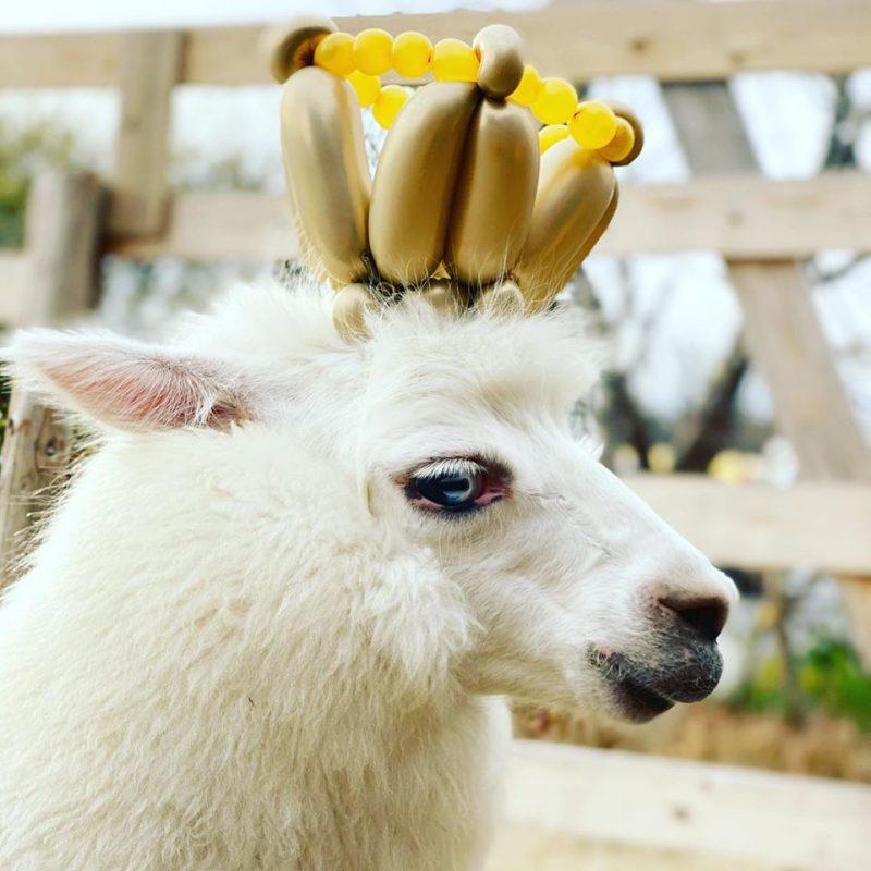 ラバン王子